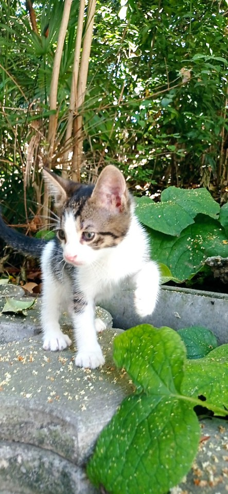Котенка в дар