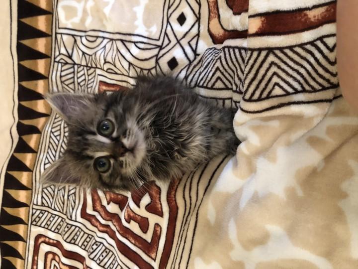 срочно нужен дом кошке